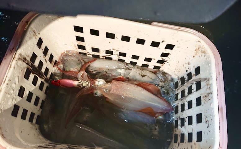 ☆ エリア:和歌山南紀白浜エリア   遊漁船:seahorse様  ☆