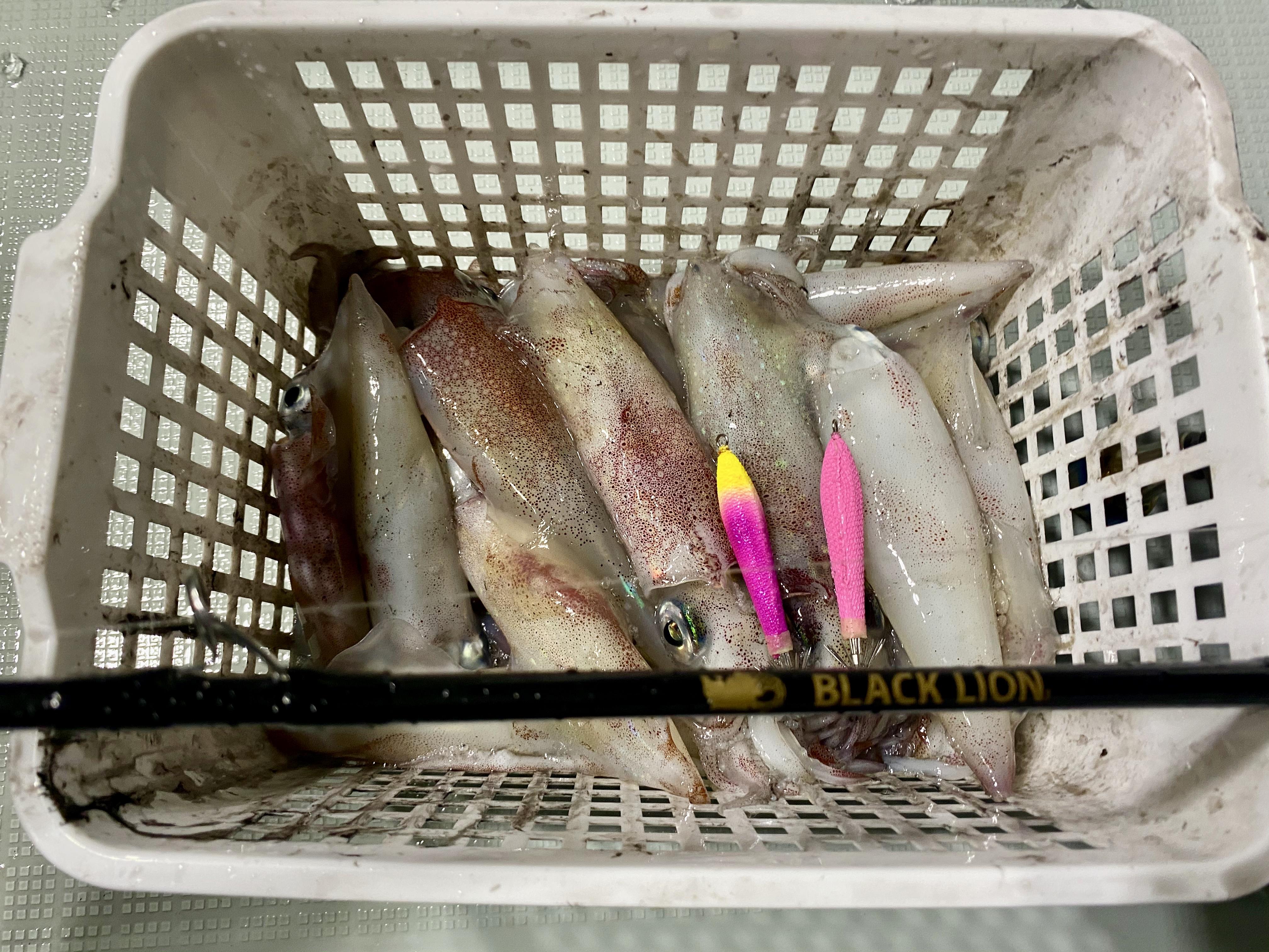 ☆ エリア:和歌山南紀エリア 遊漁船:サウスカレント様 ☆